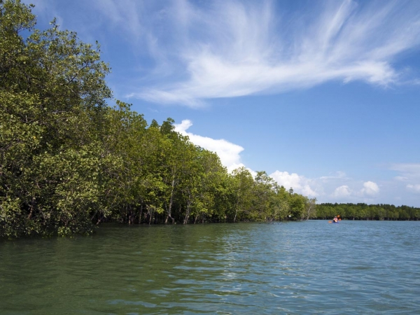Mangroves in the spotlight